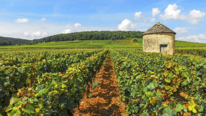 L'organisation internationale de la vigne et du vin à Dijon ?